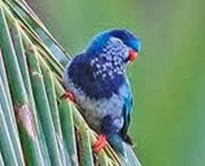 Amazing Pictures of Animals, Photo, Nature, Incredibel, Funny, Zoo, Vini ultramarina, Ultramarine Lorikeet, Aves, Bird, Alex (5)