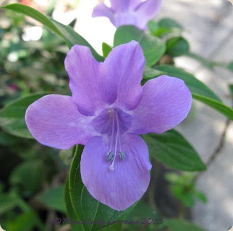 05-15-phil-violet