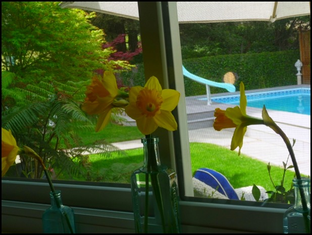 Daffodils 010 (800x600)
