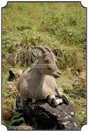 MNR_318_DSC0117_www.keralapix.com