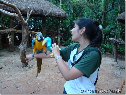 Arara-Amarela Arara Arara-Canindé Zuppy Parque das Aves Foz do Iguaçu BlogTurFoz