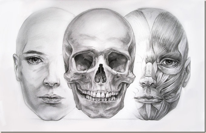 anatomy_study_by_hel999-d2yezs3