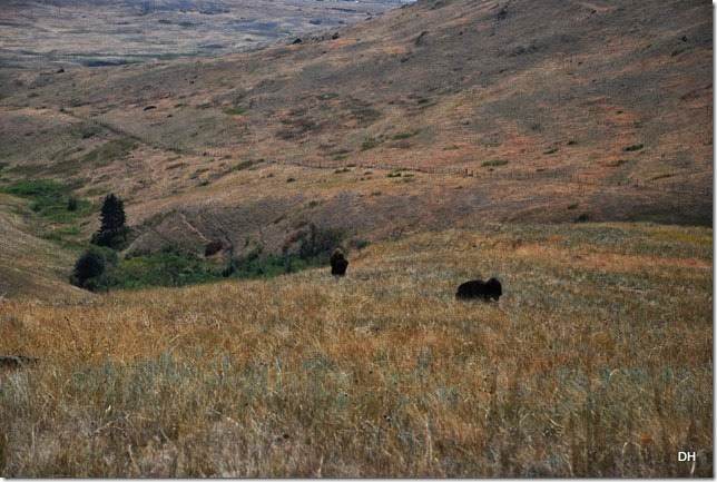 08-19-14 A National Bison Range (186)