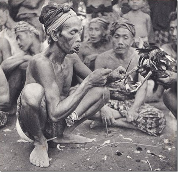 © Gotthard Schuh, ca. 1938-39, Preparing a fighting cock, Bali