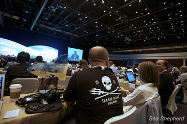 Sea Shepherd is a CITES International NGO Observer. Photo: Sea Shepherd