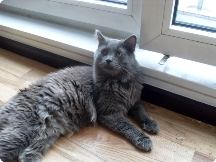 Kattene hos Daniel - Stalin