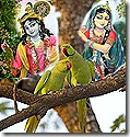 Parrots discussing Radha and Krishna