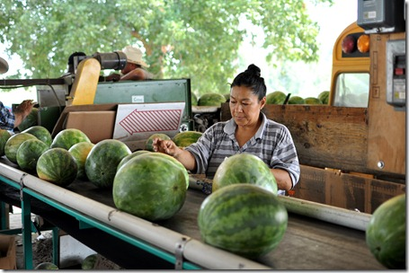 watermelons 11 0705 (104)