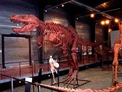 2008.09.05-002 Tyrannosaurus rex