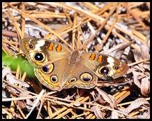 11c - Moth