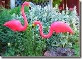 flamingos_thumb1