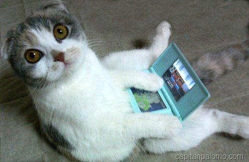 gatos en ordeandor  (9)