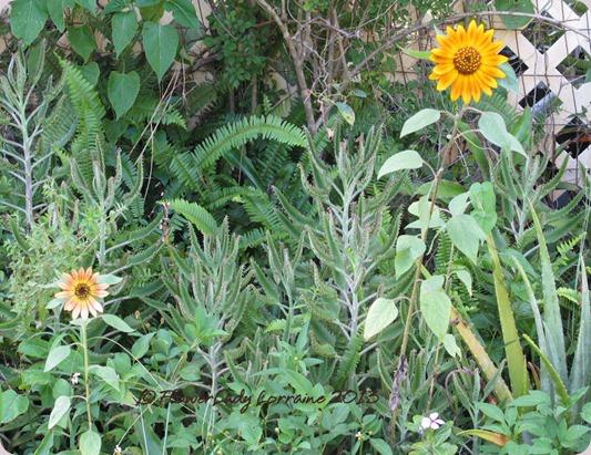 06-10-sunflowers