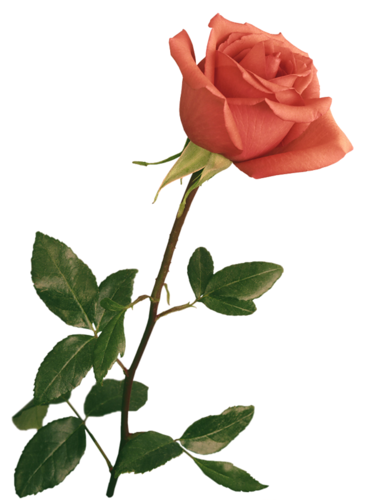 botao-rosa-laranja