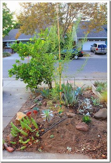 131007_driveway_succulent_bed_after_18