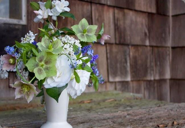 hellebores 156582_185548221570337_719094378_n  lindseymyra.com aka the liitle flower farm au