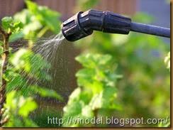 влажность и рост винограда 2