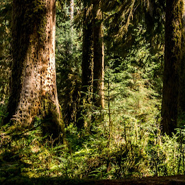 shady spot by Cindy Luelling - Landscapes Forests ( shady, summer, trees, rain forest, sun light )