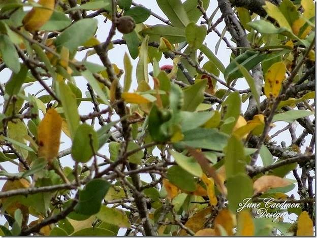 Songbird_Leaves