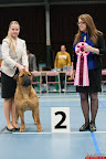 20130511-BMCN-Bullmastiff-Championship-Clubmatch-2547.jpg