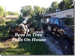 BeesIn TreeFalls