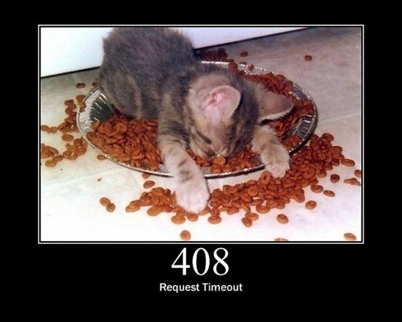 HTTP-Status-Cats-10