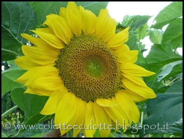 OrtoLà - La fioritura (12)