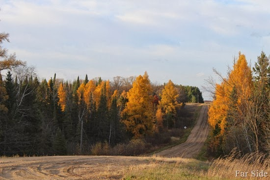 Tamarack on Macks Hill