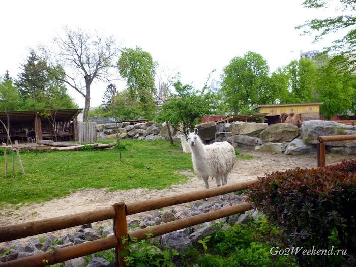 Kiev_Zoo_18.jpg
