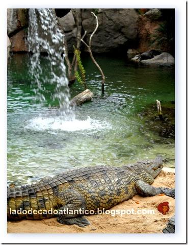 Imagem do habitat dos crocodilos no Bioparc de Fuengirola, próximo a Málaga, Espanha