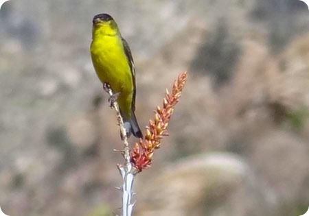5-bird