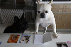 Hold on, Franny!  Let me look through the table of contents in the instruction booklet.  French Bulldog just has to be in here somewhere...
