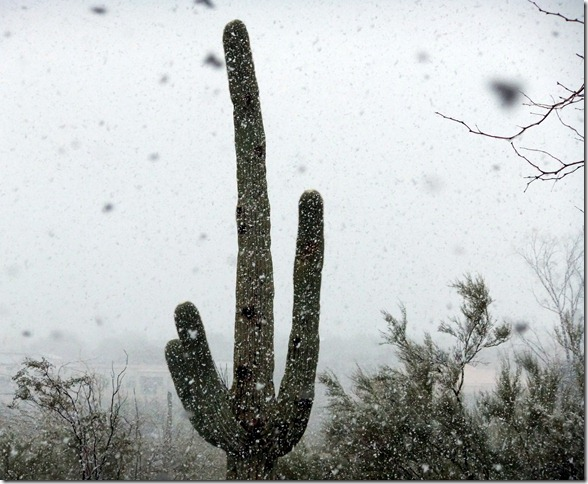 Snowy Saguaro2 2-20-2013 1-04-14 PM 3272x2689