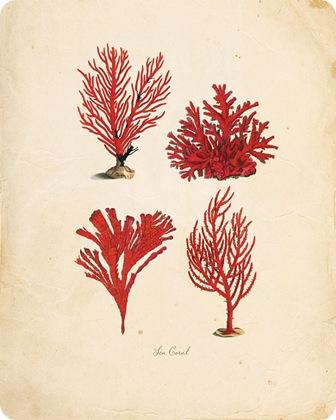 vintage coral