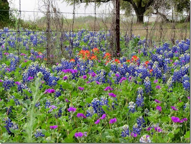 Wildflowers_Fence