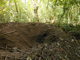 Junglefowl nest on the way up Lewotobi (Dan Quinn, July 2013)