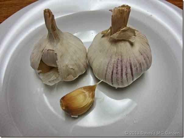 Viola_Francese_garlic