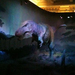 Tyrannosaurus Rex Natural History Museum