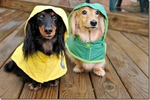 hurricane-sandy-dogs-15