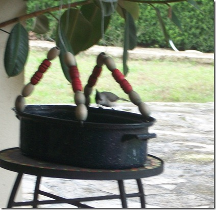 birdfeeder in the rain 017