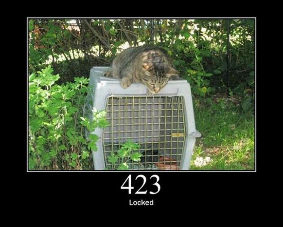 HTTP-Status-Cats-18