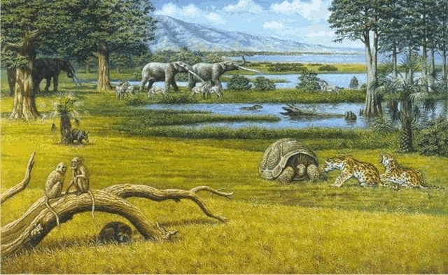 Reconstruction of a Pliocene swamp near Perpignan, from Agusti and Anton (2002), 'Mammoths, Sabertooths, and Hominids', Columbia University Press. That era, which took place from 5.8 to 2.6 million years ago, was the last time there was so much CO2 blanketing the planet. Graphic: Mauricio Anton