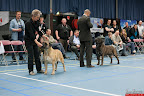 20130510-Bullmastiff-Worldcup-1086.jpg