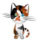 8512000-carey-de-gato-britanico-el-rojo-y-el-color-negro-con-varios-colores-de-ojos-azules-y-verdes-dibujo-i