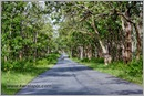 _P6A1714_road_mudumalai_bandipur_sanctuary