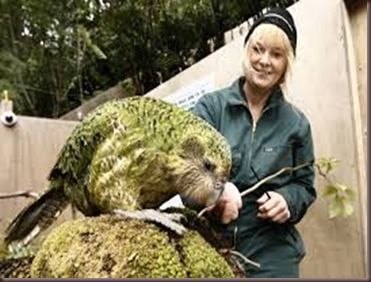 Amazing Pictures of Animals photo Nature exotic funny incredibel Zoo Kakapo birds Aves. Alex (3)