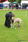 20100513-Bullmastiff-Clubmatch_31127.jpg