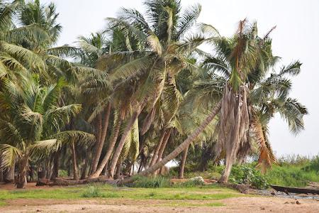 8. Plaja cocotieri - Ekpui, Togo.JPG