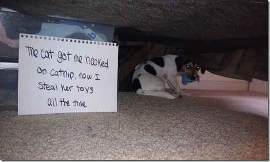 dog-shaming-bad-8