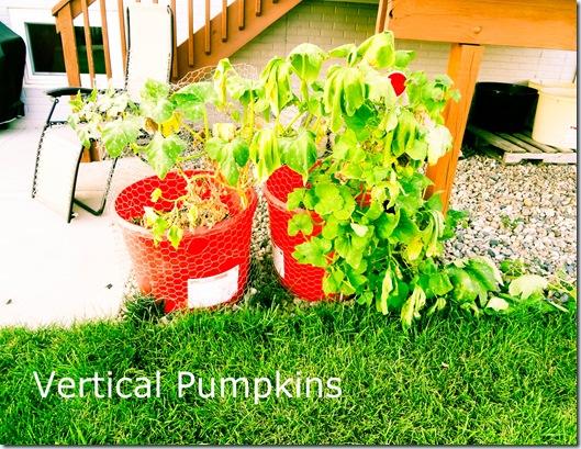 Garden July 17